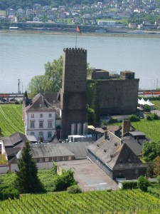 Riesling vineyard on the Rhein River